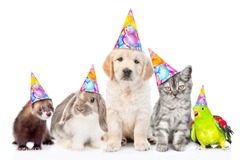 Group of pets in  party hats together in front view. Isolated on white background