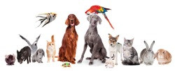 Group of pets isolated on white background