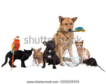 Group of Pets. Isolated on white background #1050239354