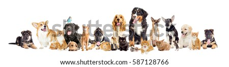 group of pets on a white background #587128766