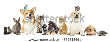 Shutterstock Group of pets on white background