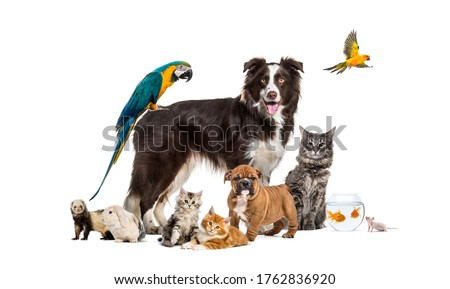 Group of pets posing around a border collie; dog, cat, ferret, rabbit, bird, fish, rodent stock photo