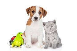 Group of pets sit together in front view. Isolated on white background