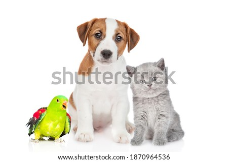 Group of pets sit together in front view. Isolated on white background stock photo