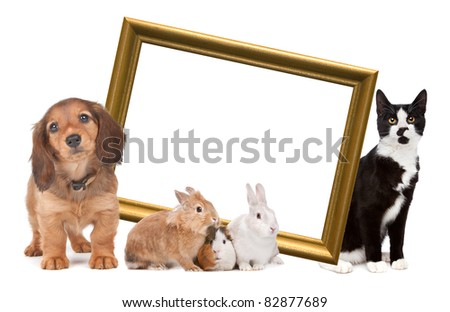 group of pets standing around a golden picture frame in front of a white background - stock photo