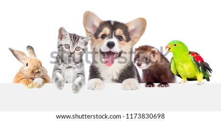 Group of pets together over white banner. isolated on white background #1173830698