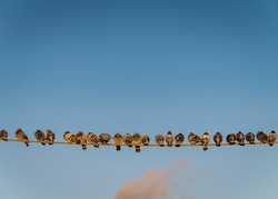 Group of pigeons sit on a wire. Blue sky with some clouds behind them.