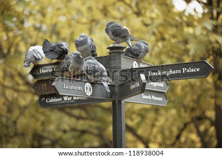 Group of pigeons sitting on a sign