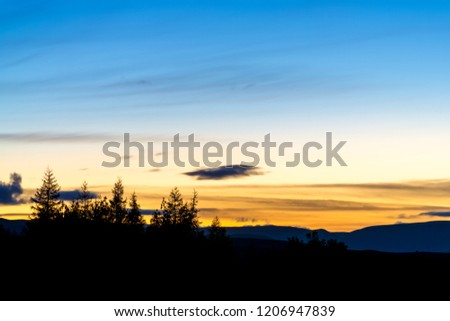 group of pine trees silhouetted under a blue and yellow sky after sunset #1206947839
