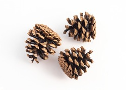 group of pinecone on white background