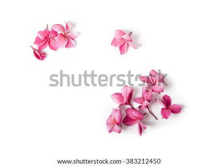 Photo of Group of Pink Frangipani isolated on White