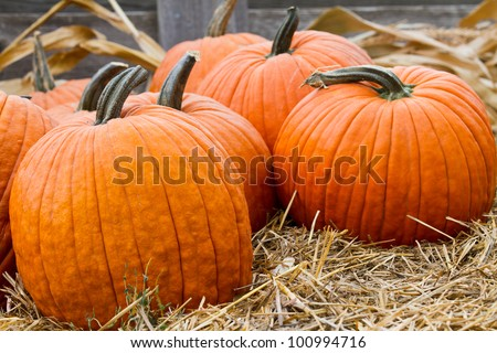 Group of pumpkins. Focus somewhat shallow and is on lead pumpkin on left.