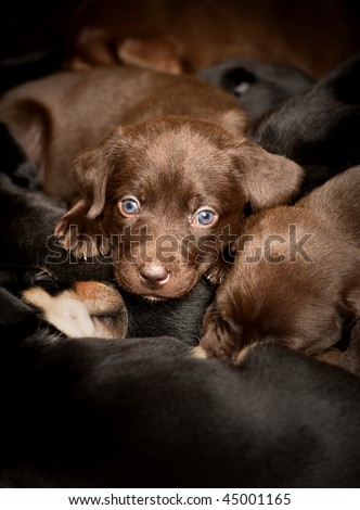 Group of puppies asleep while one awake and looking at camera