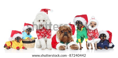 Group of puppies purebred dogs in Christmas hats on a white background