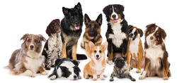 Group of purebred dogs isolated on white background