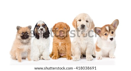 group of purebred puppies....