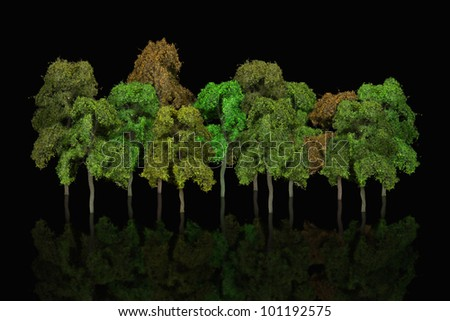 group of scale model Ash trees