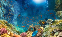 Group of scuba divers exploring coral reef. Underwater sports and tropical vacation.