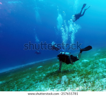 Group of Scuba Divers Underwater #257655781