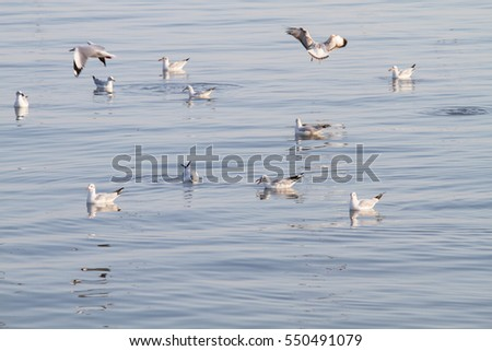 Group of seagulls floating on the sea #550491079
