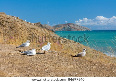 Group of seagulls on the beach in Crimea