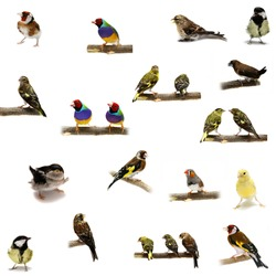 Group of  small birds on the white background