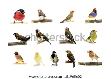 Group of small birds on the white background #151965602
