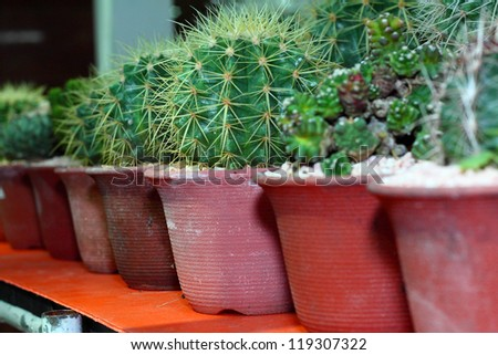 Group of small cactus grow in the pot.