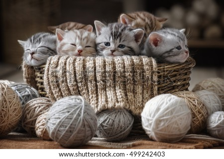 group of small striped kittens...
