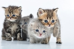 group of small 3 weeks old kittens walking towards