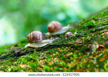 group of snails climbing up on a tree