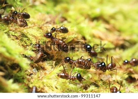 group of soldier termites