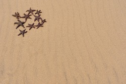 Group of starfish in the sand with copyspace