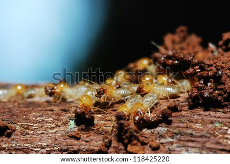 Group of termites buiding their nest
