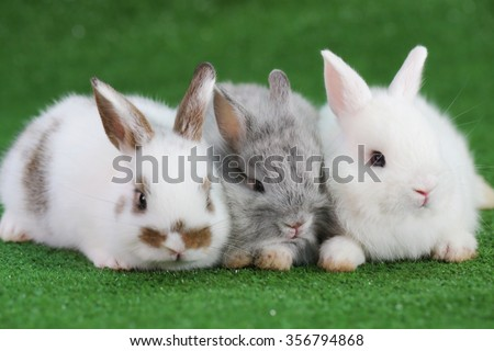 Group of three baby adorable rabbits; white and grey Netherlands dwarfs rabbit and white and brown dot baby bunny sitting on green faux grass