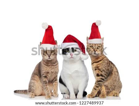 group of three cute santa cats of different breeds sitting on white background