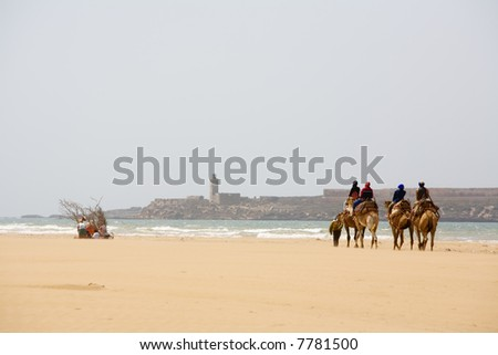 Group of tourists on camels on coast of ocean