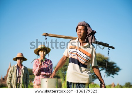 Group of Traditional Asian farmers working in paddy field