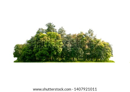 Group of tree  isolated on white Photo stock ©