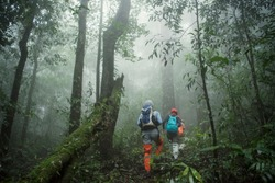 Group of Trekking in rainforest jungle. adventure and explorer concept.