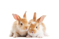 group of twobaby light brown rabbits with long ears isolated on white