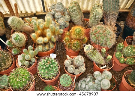 Group of various small cacti in a nursery.