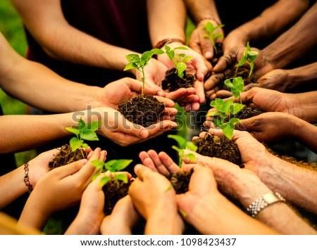 Group of volunteers planting new trees