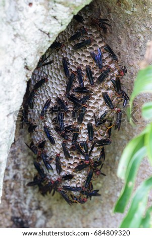 group of warrior wasps building a large nest on a large tree stump in the rainforest of Costa Rica