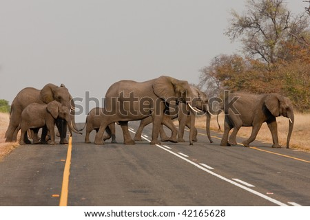 Group of wild elephants in southern Africa.