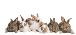 group of young brown and spotted rabbits sitting in a row isolated on white