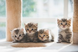 Group persian kittens sitting on cat tower