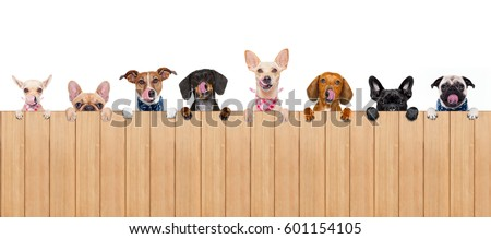 group row of different dogs behind a blank banner placard blackboard, isolated on white background licking hungry with tongue