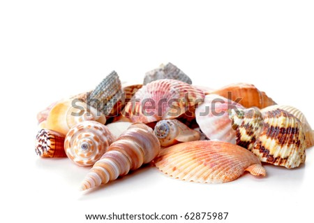 Grouping of seashells on a white background.