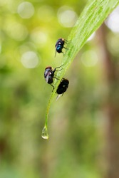 Groups of flies in a forest. Leaves are so bright. The background gives a feel of cold. Raindrops everywhere l